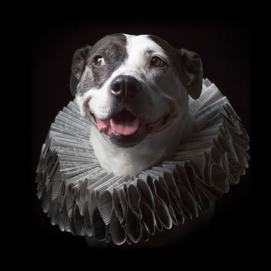 A creative pet portrait from famous dog photographer J.B. Shepard. This portrait is from Shepard's signature series, Paper Hats.