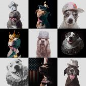 Cute photos of dogs from famous D.C. pet pet photographer, J.B. Shepard